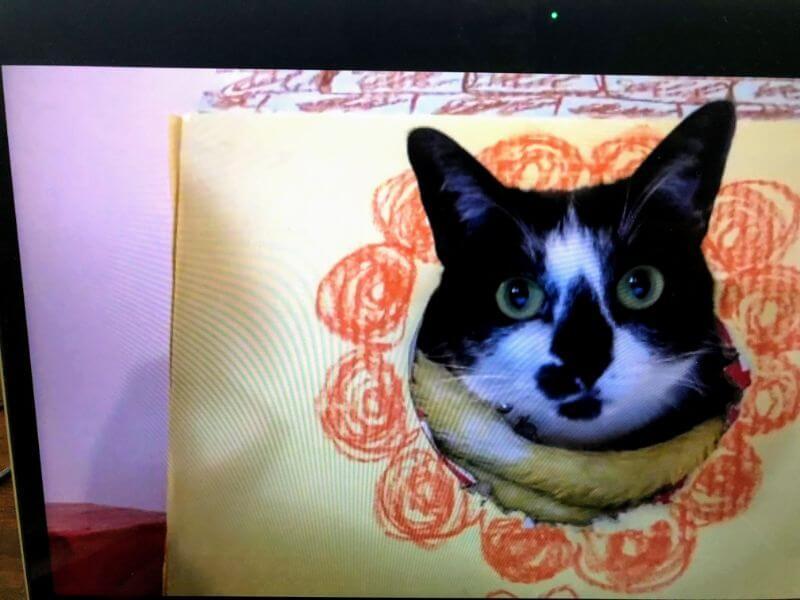 実家の猫の写真
